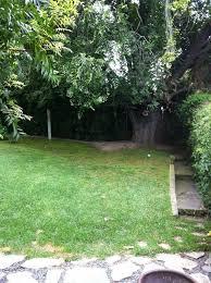 Backyard Tree Ideas Need Ideas For Sloping Shady Backyard That Won U0027t Harm Tree