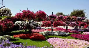 flower garden wallpaper most beautiful flower u2013 best wallpaper