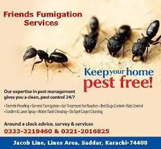 Bed Bug Cleaning Services Fumigation Services In Karachi 03333219460 In Louisville Co