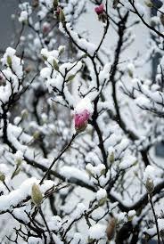 60 best winter wonderland images on pinterest winter wonderland