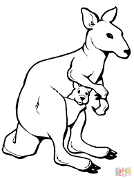kangaroos coloring pages free coloring pages