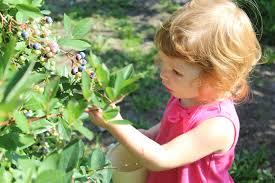 Pumpkin Patch Moorpark by A Must Visit U Pick Blueberry Farm
