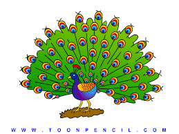 peacock drawing kids kids coloring europe travel guides