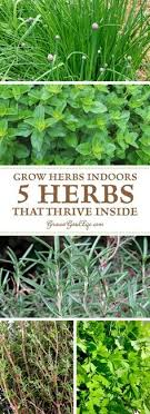 lights to grow herbs indoors the best herbs to grow indoors or in low light situations happy
