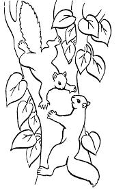 best 25 coloriage écureuil ideas on pinterest dessin d animaux
