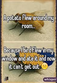 Potato Flew Room Potato Flew Room Bird Flew Window