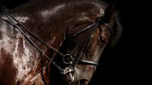 horse close up background 6885220