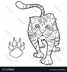 tiger with paw print coloring pages royalty free vector