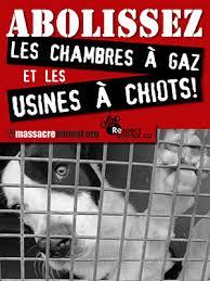 chambre a gaz faux animaux de compagnie euthanasie de chiens et chats chambres à gaz