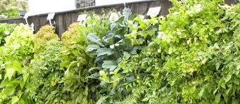 winsome design hanging vegetable garden magnificent ideas