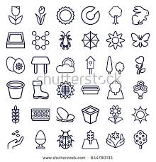 sun flower seeds stock images royalty free images u0026 vectors