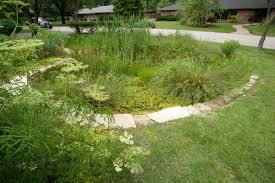 kansas native plants landscaping for birds u2013 great missouri birding trail