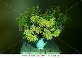 Caterpillar Vase Dahlia Mix Stock Images Royalty Free Images U0026 Vectors Shutterstock