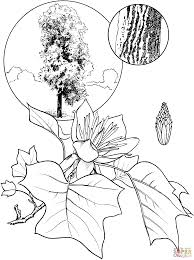 tulip tree leaf coloring page free printable coloring pages