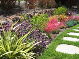 drought tolerant plants for california planted away from a