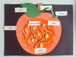 parts of a pumpkin craft homeschool kindergarten craft autumn