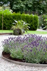 119 best levendula images on pinterest lavender garden ideas