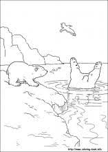 polar bear coloring pages coloring book