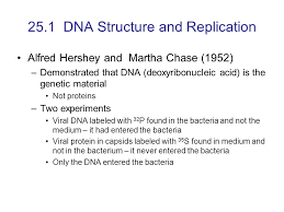 Dna Structure And Replication Worksheet Key 25 1 Dna Structure And Replication Ppt
