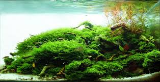 Aquascape Malaysia Manage Your Freshwater Aquarium Tropical Fishes And Plants
