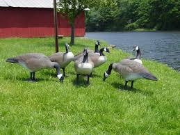 donna s lawn ornaments geese decoys