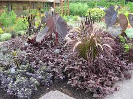 Rock Garden Plan by Basic Design Principles Using Color In The Garden Proven Winners