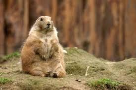 groundhog lesson