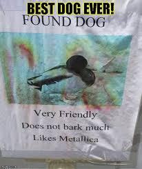 Heavy Metal Meme - heavy metal duck dog imgflip