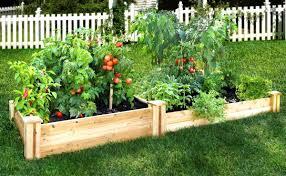 vegetable garden ideas for beginners interior design
