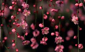 hd images of flowers beautiful pictures of items in the color green posted on