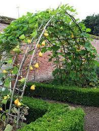 Fruit Garden Ideas Garden Designs Using Fruit And Vegetables Search