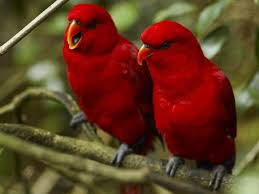 195 best birds images on pinterest beautiful birds animals and