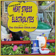 Backyard Chicken Magazine by The Chicken Chicken Heat Stress Dehydration And Homemade