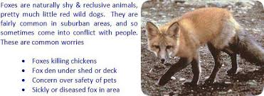 Can You Bury Animals In Your Backyard How To Get Rid Of Fox In The Yard Or Garden