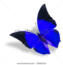 butterfly shadow stock images royalty free images vectors