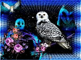 white owl 2 wallpapers color tag wallpapers page 15 colorful daizys flowers color splash