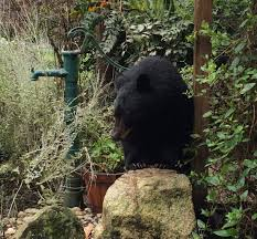 what do you do if there u0027s a bear in your garden u2013 play without