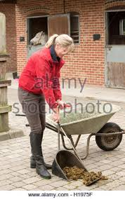 woman collecting horse manure in a field to use on her garden and