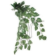 thick trailing ivy pick vine bunch for trellis hanging baskets ebay