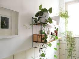 Bathroom Standing Shelves by Bathroom Vines Bathroom Plants On Black Iron Shelves Plus Wooden