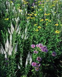 plants native to illinois bringing back the prairie nature and ecology