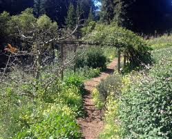 permaculture 101 what is a forest garden