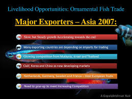 agribusiness 360 ornamental fish trade