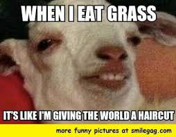 Cheer Up Meme - 10 goat memes to cheer you up