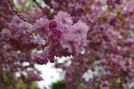 free images tree branch leaf flower petal produce