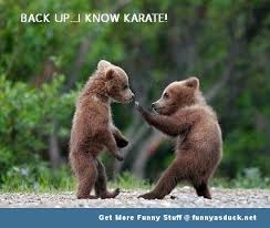 Bear Stuff Meme - bear in karate position funny meme picture