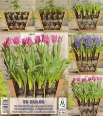 best 25 planting bulbs ideas that you will like on pinterest