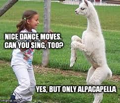 Alpaca Meme - disco alpaca imgflip