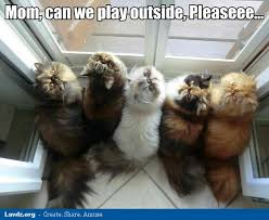 Mom Please Meme - mom can we play outside please cats meme jpg