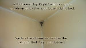 light bed bug infestation the worst case of bed bug infestation quest pest